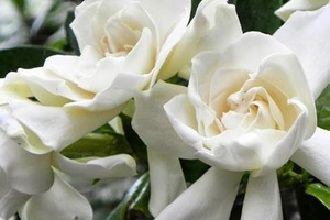 Сама себе химик: как с помощью самостоятельно созданных химикатов растение может привлечь любовь или развязать войну