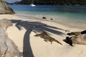 Отрицательный тест на COVID-19и входной скрининг: Сейшельские острова в августе будут готовы принимать туристов