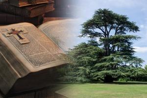 Деревья – это люди в контексте, или Что значит «расти, как ливанский кедр» по Библии?