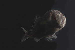 Чем глубже, тем темнее: ученые выяснили, почему глубоководным рыбам не нужен яркий окрас