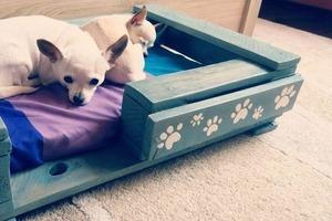 Нашла у мужа в гараже старые поддоны и сделала из них кроватку для моих собак: инструкция с фото