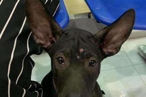 Снова счастливы вместе: потерявшийся щенок нашел дорогу к своей ветеринарной клинике, и его вернули хозяйке