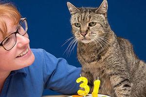 Исаак Ньютон изобрел кошачью дверь: 18 лет подряд 8 августа отмечается Международный день кошек