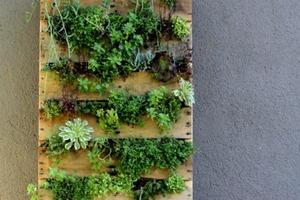 Из деревянного поддона сделала в саду вертикальный контейнер для цветов: он очень украшает место и радует глаз