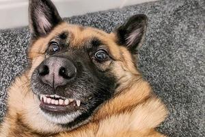 Улыбнитесь, господа: победители конкурса самых смешных фотографий животных 2020