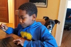 Владельцы усатых делятся в instagram фото, как их питомцы помогают им учиться