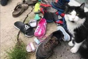 Девушка стала часто находить чужую обувь в своем саду: посмотрев записи видеокамер, она нашла воришку соседских вещей