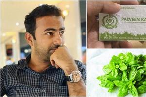 Индийский чиновник сделал визитную карточку, из которой при посадке в грунт вырастает базилик