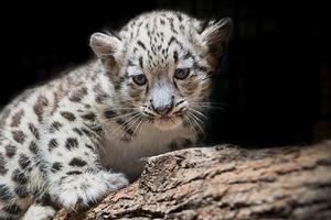 Ученые выяснили, что в исчезновении 96 % млекопитающих виновато человечество