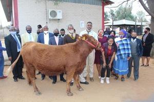 Как поощрить за отличную учебу? В Ботсване выпускника средней школы наградили упитанной коровой за его достижения