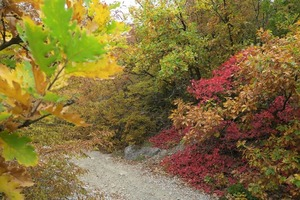 Если на Артамона Змеевика (25 сентября) почти все листья опали, то зима будет теплой