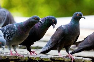 Птичий мозг гораздо больше похож на человеческий, но никто этого не замечал: результаты новых исследований