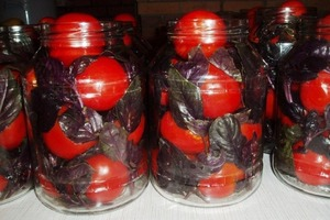 Маринованные помидоры по-итальянски. Их изюминка - базилик, придающий особый вкус