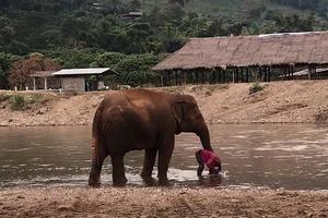 Слониха зашла в реку вслед за женщиной, чтобы защитить ее: трогательное видео