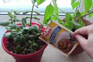 Корица помогает и на огороде, и дома: как применять специю для защиты растений