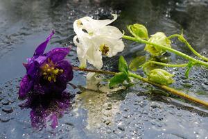 На Руси нельзя было дарить сорванные цветы: считалось, что они несут плохую энергетику