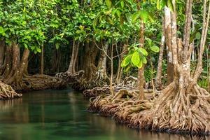 Их называют чудом нашей планеты: фотографы со всего мира запечатлели хрупкость и красоту мангровых лесов