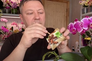 Припудриваем корни корицей: при пересадке орхидеи опытные цветоводы всегда берут пачечку приправы