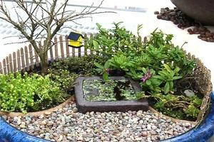 Миниатюрный сад - прекрасная идея для оформления горшка с домашними растениями (фото)