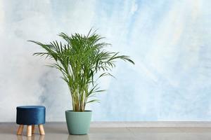 Пальма, английский плющ и еще два растения, которые способны очищать воздух дома от пыли и токсинов