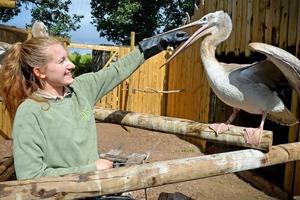 Паскаль долго ждал попутного ветра: пеликан вылетел на крыльях ветра из зоопарка в местное озеро, поплавал, а что было дальше, рассказали в