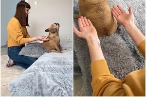 Падение на доверие: собака настолько уверена в своих хозяевах, что готова пасть в их объятия не глядя (видео)
