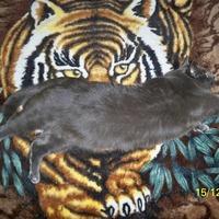 Тигр Тигранов